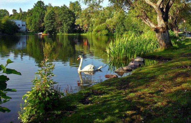 Kyrkviken - En av de vackra och värdefulla vattenmiljöerna i Nacka.