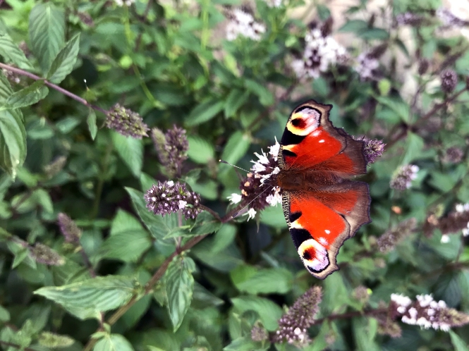 Fjäril högupplöst
