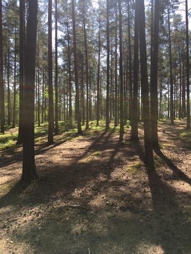 Strålsjön träd